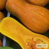 Семена тыквы. Сорт Мускатная (Гитара)