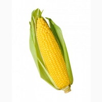 Семена кукурузы Краснодарский 194 МВ, Краснодарский 385 МВ, РОСС 130 МВ и др