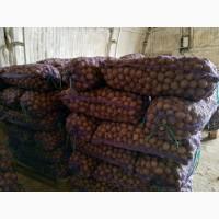 Дешевый семенной картофель 5р. /кг