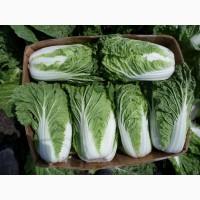 Оптовая продажа овощей: Пекинская капуста, Тыква