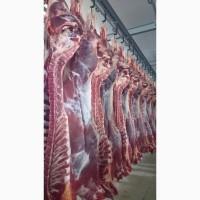 Продаем мясо говядины оптом