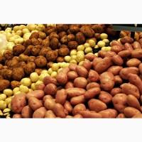 Продаем картофель