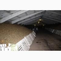 Картофель оптом от КФХ. 5+Гала, Гранада