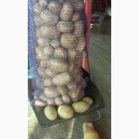 Картофель Аризона в Ростовской области