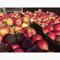 Яблоки РБ оптом