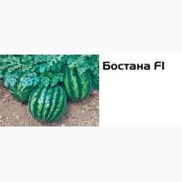 Семена арбуза Бостана