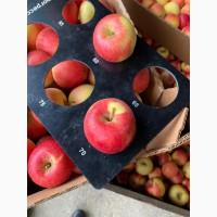 Продам яблоки первых сортов