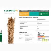 Семена сои: сорт СК ПЛАНТА селекции Соевый комплекс