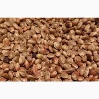 Продаём зерно конопли, пищевой для масла, жмыха, семечки