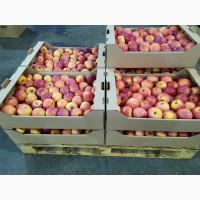 Яблоко Флорина Сорт1 калибр 70-75 в картонном лотке 60х40, вес 13-15кг, мытые полированные