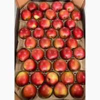 Яблоки оптом напрямую из сада