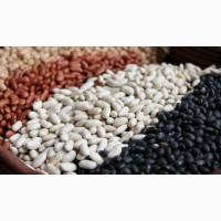 Экспорт фасоли из Украины