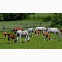Продаю лошадей и жеребят от производителя
