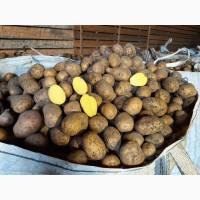 Продам картофель от кфх
